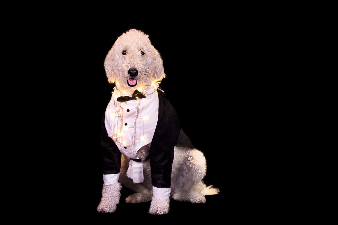 whitedog2017